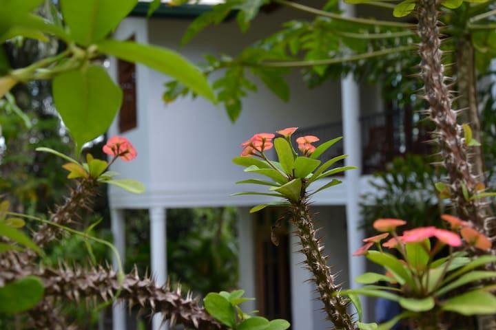 Hillside Relax Villa - Kandy - Bed & Breakfast