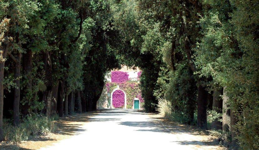 Schinosa Farmhouse since 1647 Trani - Trani - Квартира