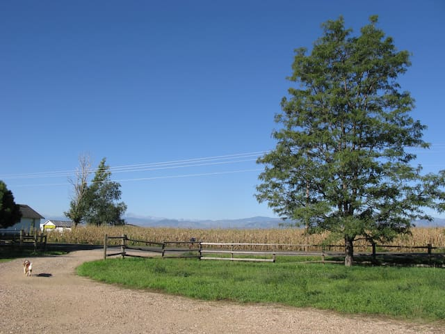 Country home with Rocky Mtn views! - Fort Collins