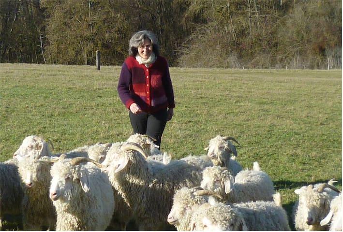 Ferme élevage de chèvres angora - Clermont-Dessous - Hus