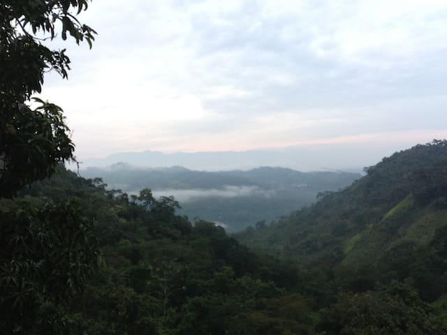 Manas Viejas - Cachipay