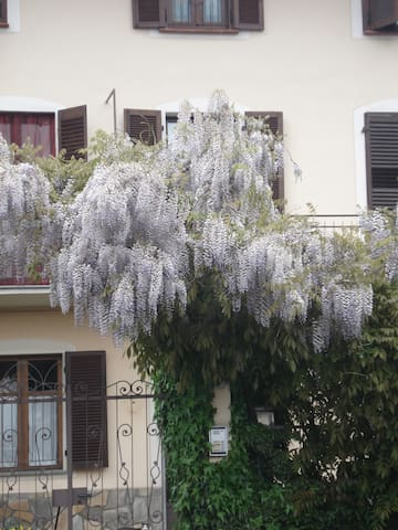 Wisteria, near Turin - Nichelino - Bed & Breakfast
