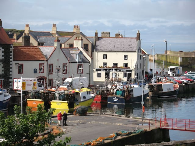Apartment Right on the Harbour!   - Eyemouth - Appartement