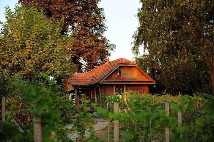 Peaceful & comfortable oasis(apt.5) - Kazimierz Dolny - Haus
