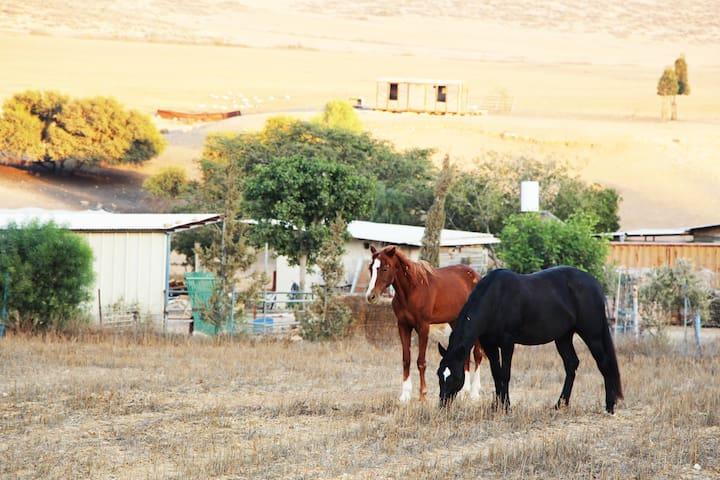 Farm in the northern Negev - Meitar