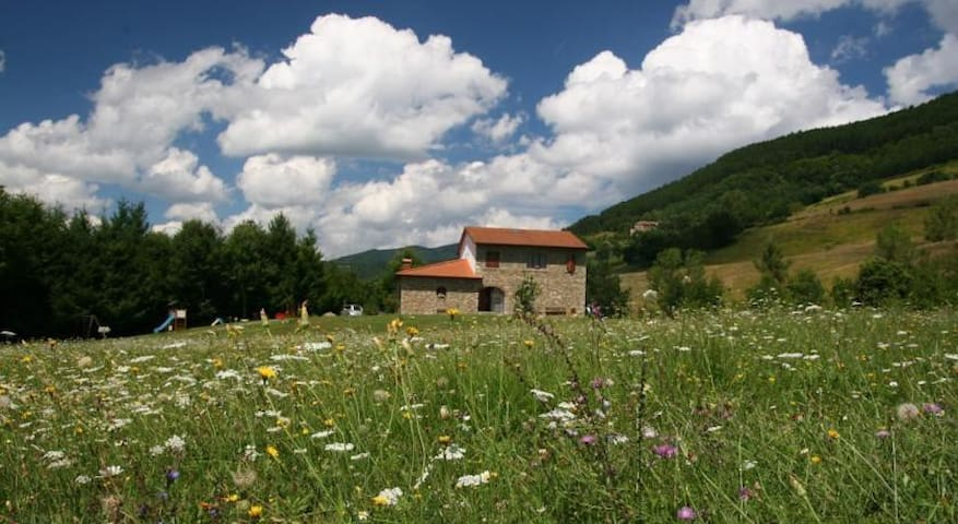 Apartment in farm holidays 4 people o più - Poppi - Apartamento