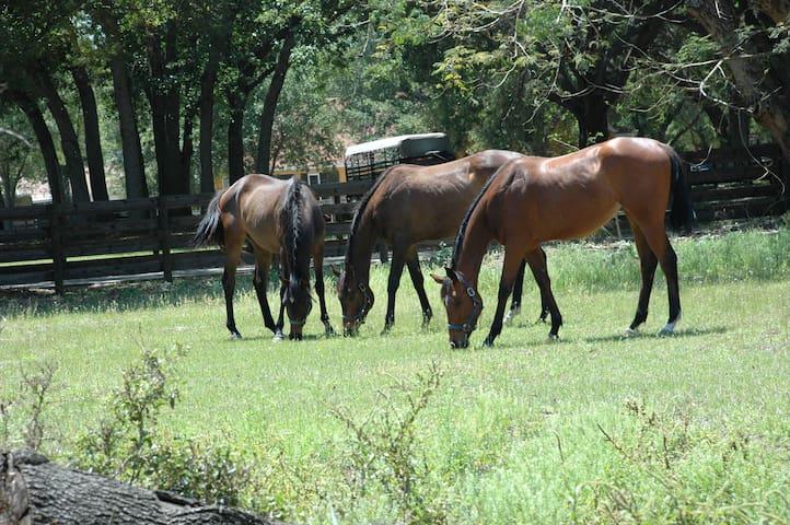 Horse Farm on a Beautiful Lake - Winter Haven - Dům