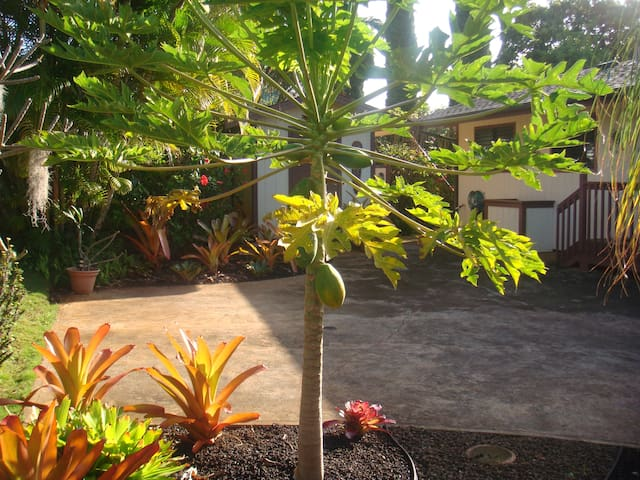 Bamboo for Two Cottage - Kalaheo - Casa
