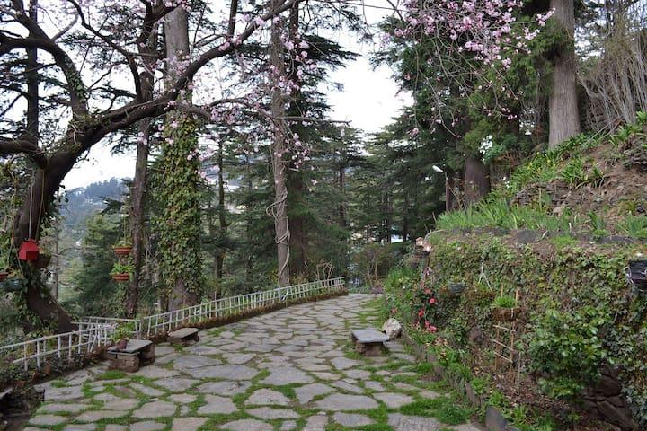 Sanjiv's Aira Home Retreat - Shimla - Aamiaismajoitus