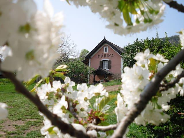 romantic reed roofed house Márika - Badacsonytomaj - Dom