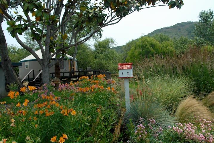 Carmel River Yurt Retreat - Carmel - Yurt