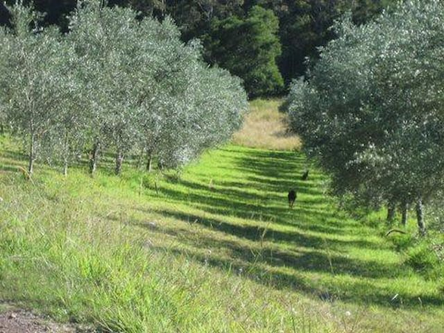 23 acre olive farm- Pencil Creek - Mapleton - Maison