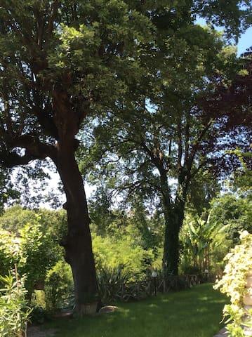 """Bed & Breakfast """" Big Oak"""" - Monte Colombo - Pousada"""