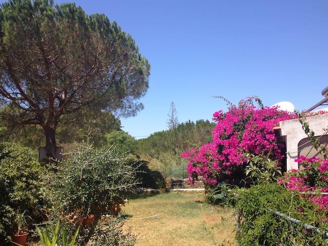 Relax in Beautiful Rural Algarve - Algoz - Huis