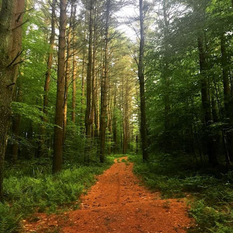 Escape to the Woods of Northwest CT - Morris - Çadır