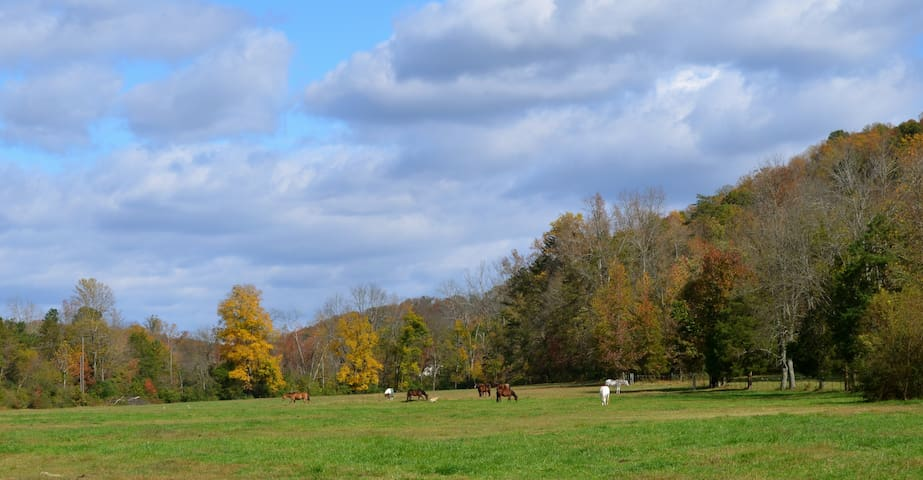 Relax at our working farm! - Ooltewah - Autocaravana