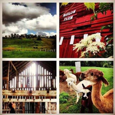 Unique Farmhouse with Alpaca&LLama! - Oxford - Hus